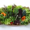 まいうKOREA - 料理写真:野菜畑