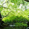 明治の森箕面 音羽山荘 - メイン写真: