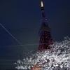 タワシタ - メイン写真: