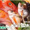 泳ぎイカ 北海道知床漁場 - メイン写真: