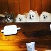 レッドウッドカフェ - メイン写真: