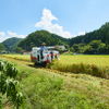 日吉やさい畑生活 - メイン写真: