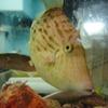 旬鮮酒場 Dank - 内観写真:店内の水槽では魚が泳いでおり、期待が膨らむ!