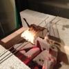 旬菜 いまり - 料理写真:焼き物は炭火です!