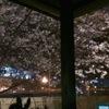志津可 - 内観写真:春には桜が咲きます