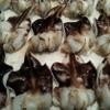 錦 - 料理写真:いまが旬のとり貝