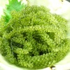 樹里 - 料理写真:活海ぶどう  別名グリーンキャビア。粒々のプチプチとした食感はクセになります。