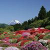つつじの茶屋 - 外観写真:庭園からは富士山が見えます。