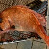 やひろ - 内観写真:注文を受けた後、生簀からすくって素早く調理します。新鮮なイカや魚を味わえるのが嬉しい♪