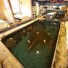 やひろ - 内観写真:店内にある大型生簀では、活きのいいイカや鮮魚が泳いでいます。