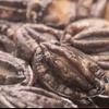 焚火家 - 料理写真:北海道産「活きえぞあわび」。ほぼ仕入れ値でご提供します!刺身がお薦めです!