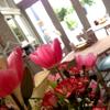 パプリカ食堂ヴィーガン - メイン写真: