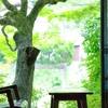 山ばな平八茶屋 - メイン写真: