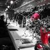 旅籠 - メイン写真: