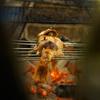 炉端 百式 - メイン写真: