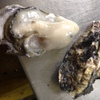 天武 - 料理写真:殻からプリッとあふれる濃厚なカキです。
