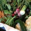 バクロウ - 料理写真:契約農家の有機野菜
