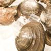 根室食堂 - 料理写真:活きほっき貝刺