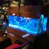 神田基地 - 内観写真:青い南国水槽が光ります!