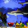 GRAND SHARK - メイン写真: