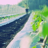 STAND BY FARM - その他写真: