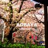 AOBAYA - メイン写真:
