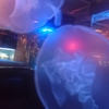 BLUE FISH AQUARIUM - メイン写真:
