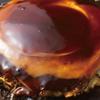 鶴橋風月Modern - 料理写真:「お好み焼き」