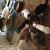 猫カフェととの森 - メイン写真: