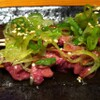 まるいち - 料理写真:レバ刺し