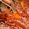 マルカン漁業部 海がき本店 - 料理写真:漁港直送の生きている『活ぼたんエビ』は、殻をむいてテーブルへ