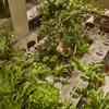 熱香森 - 内観写真:2Fから見下ろした風景