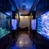 サントリーバー&ダイニング 北新地 水響亭 - メイン写真: