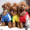 Dog Cafe aRC-eN-CieL - メイン写真: