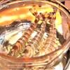 車海老専科 膳所龍門 - 料理写真:酔っ払い海老「ぶらり途中下車の旅」