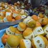 博多水たき元祖 水月 - その他写真:年明けに絞るダイダイで来年以降の商売の段取りをしています