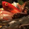 水魚 - メイン写真: