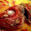 ラ・スコリエーラ - 料理写真:名物のアクアパッツァはトロトロ旨旨!