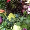 小田原フレンチ Nantona - 料理写真:季節毎に彩りを変える鎌倉野菜
