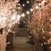 HIROSHIMA 2016 RESTAURANT UNDER THE SKY - メイン写真:
