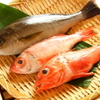 魚王KUNI(うおくに) - メイン写真: