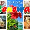 沖縄ダイニング りょく - メイン写真: