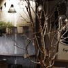 ハチカフェ - メイン写真: