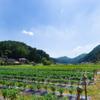 田舎生活 - メイン写真: