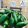 菜の音 - メイン写真: