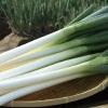 野菜が美味しい鶏豚ラーメン まる重 - その他写真: