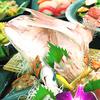 九州桜 - メイン写真: