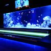 ベリーズ - 内観写真:お魚君達も可愛らしく、立派に接客しています!?
