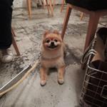【白金エリア】ワンちゃんもOK!犬と入れるカフェ8店