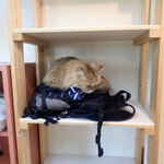私家版 猫カフェ100選(もないけど・・・)その2【西日本】
